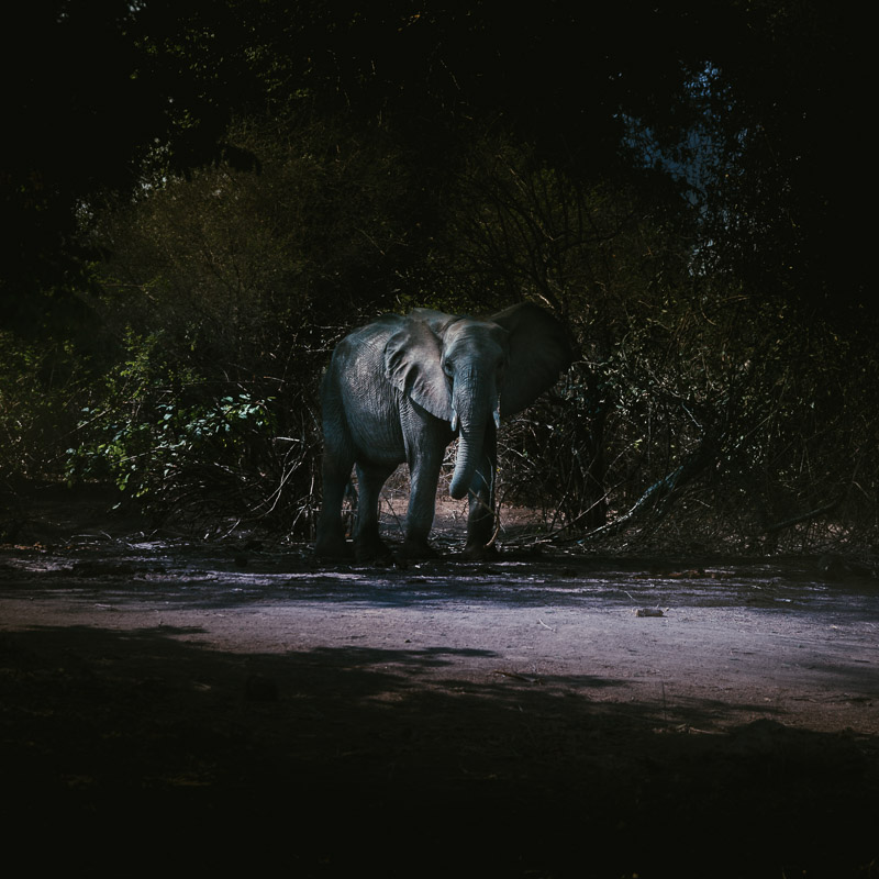 elephant-at-night-800