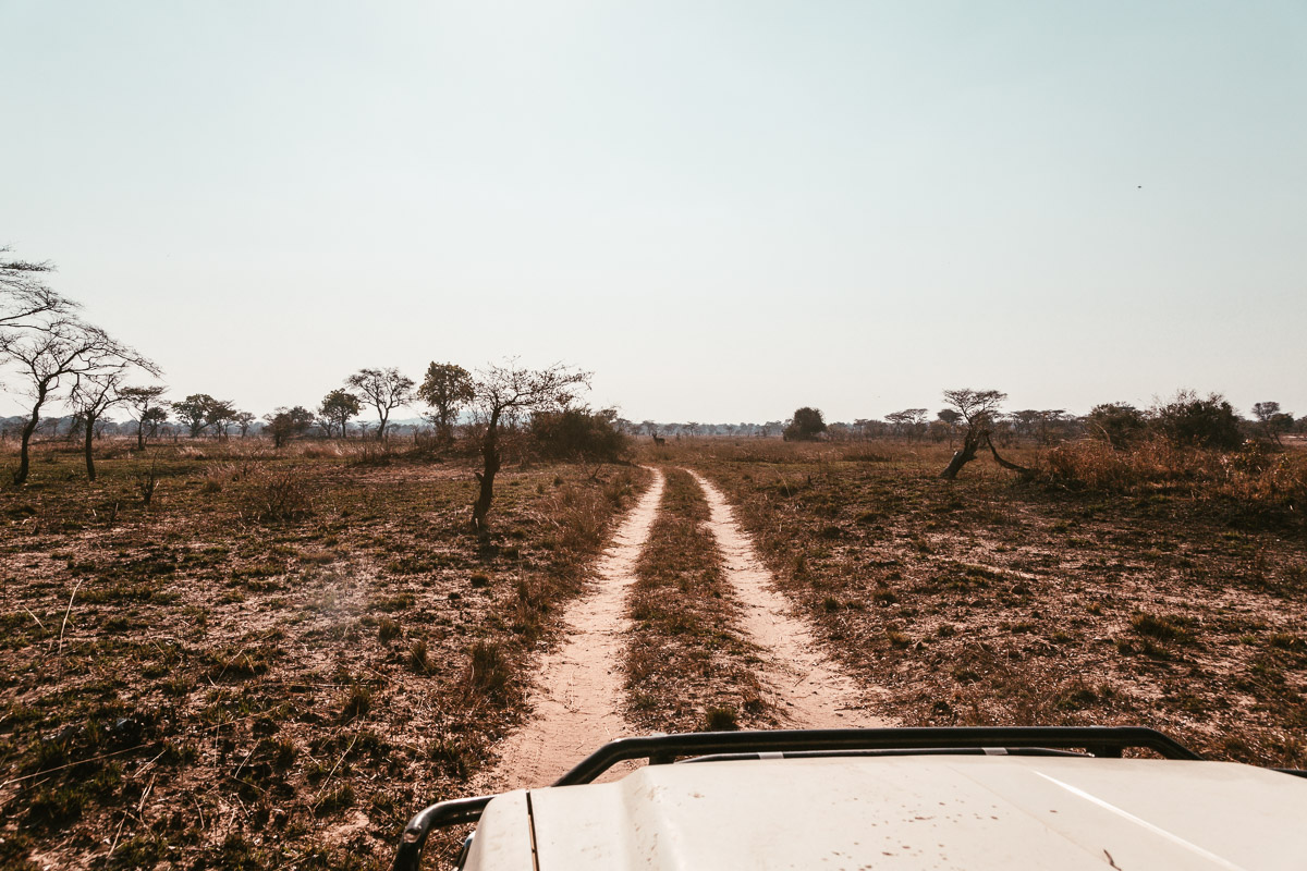 Game drive in the savannah