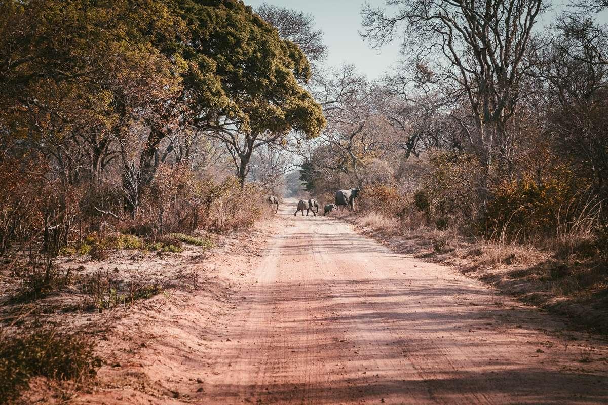 Elefanten kreuzen unseren Weg